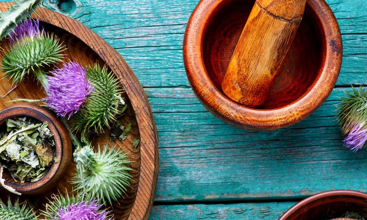 Milk Thistle: Benefits and Side… | Cary Gastroenterology Associates